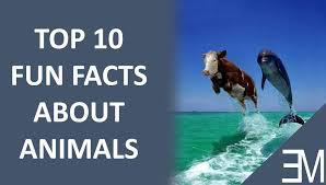 Random Fun Facts about Animals